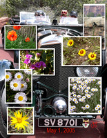 Bentely and Flowers Collage.jpg