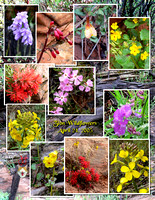 Zion Flower Collage.jpg
